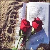 Avui és un dia especial, un dia plè de roses, de llibres, de ganes, de il.lusió i de primavera. Feliç Sant Jordi a tot@s 🐉🌹📚. #santjordi2021 #tradicions #sompeixaters